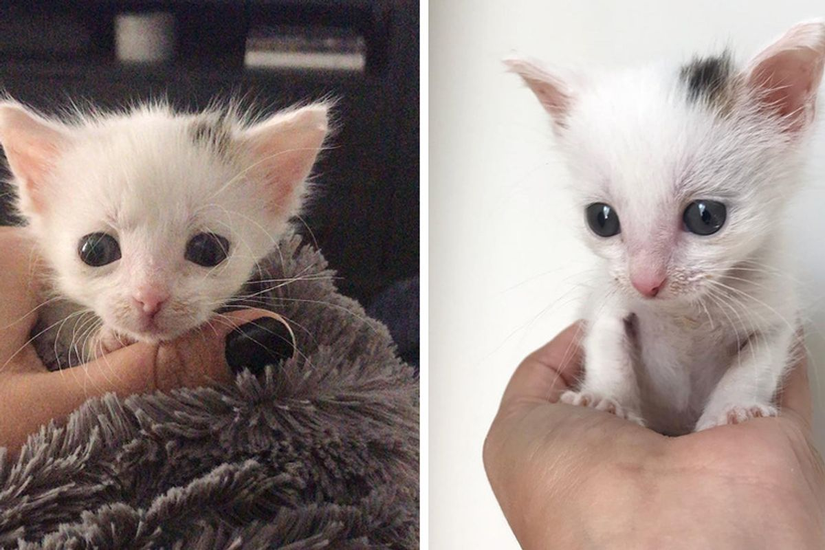 Veterinary Nurse Saves Palm-sized Kitten Despite Being Told She Should Give Up