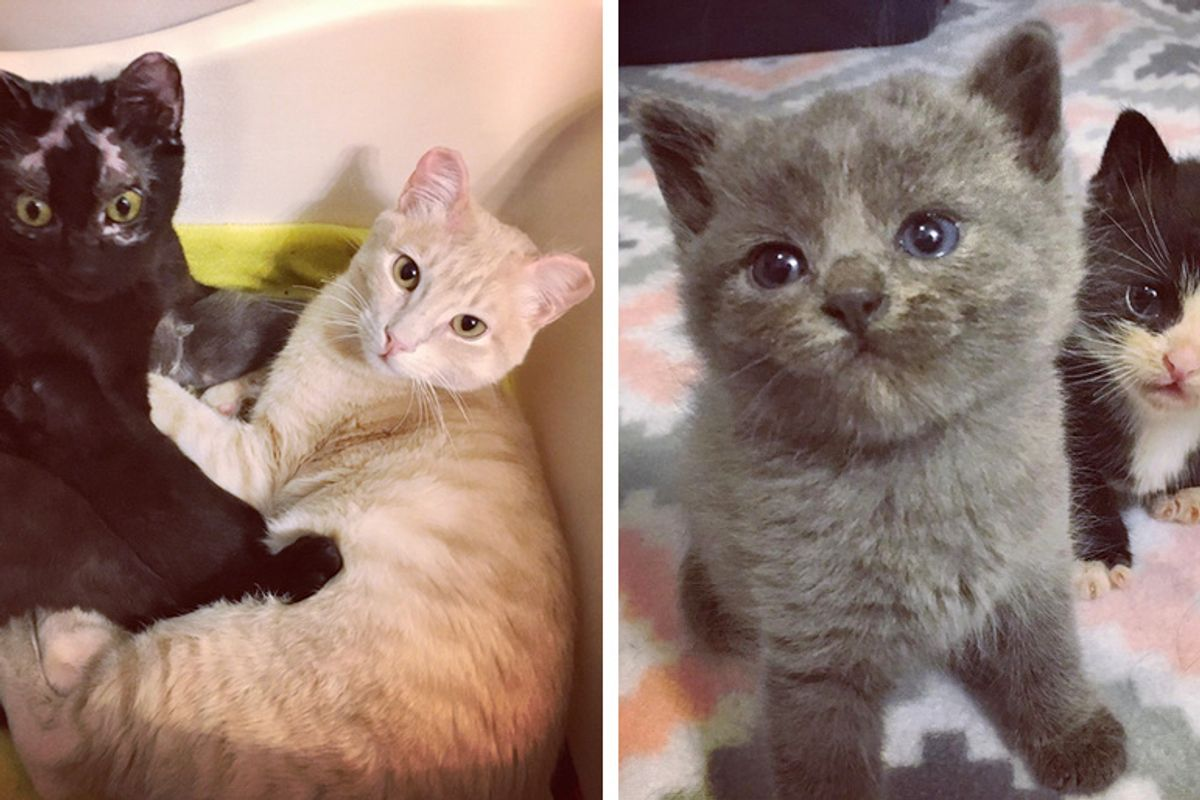 Cats Who Survived Car Fire, Got Help for Their Kittens Then Saved Orphaned Kitties Too