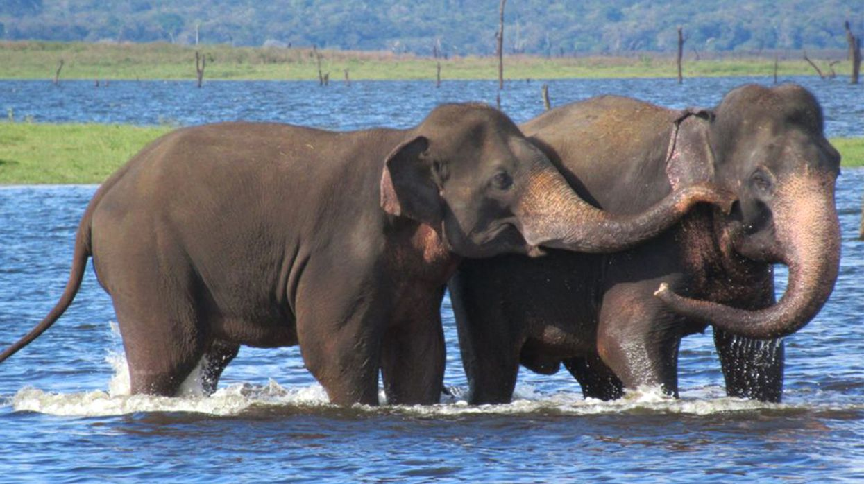 To Save Slow-Breeding Giants, Biologists Recommend New Method for Defining Endangered Species