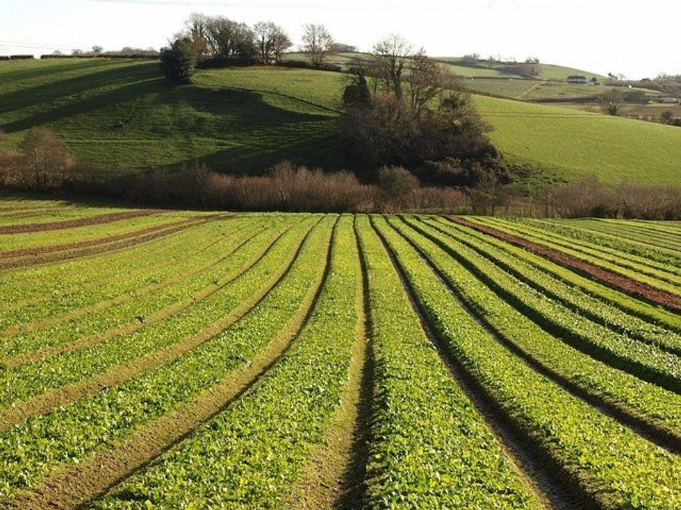 Ungrounding The Organic Marketing Plants