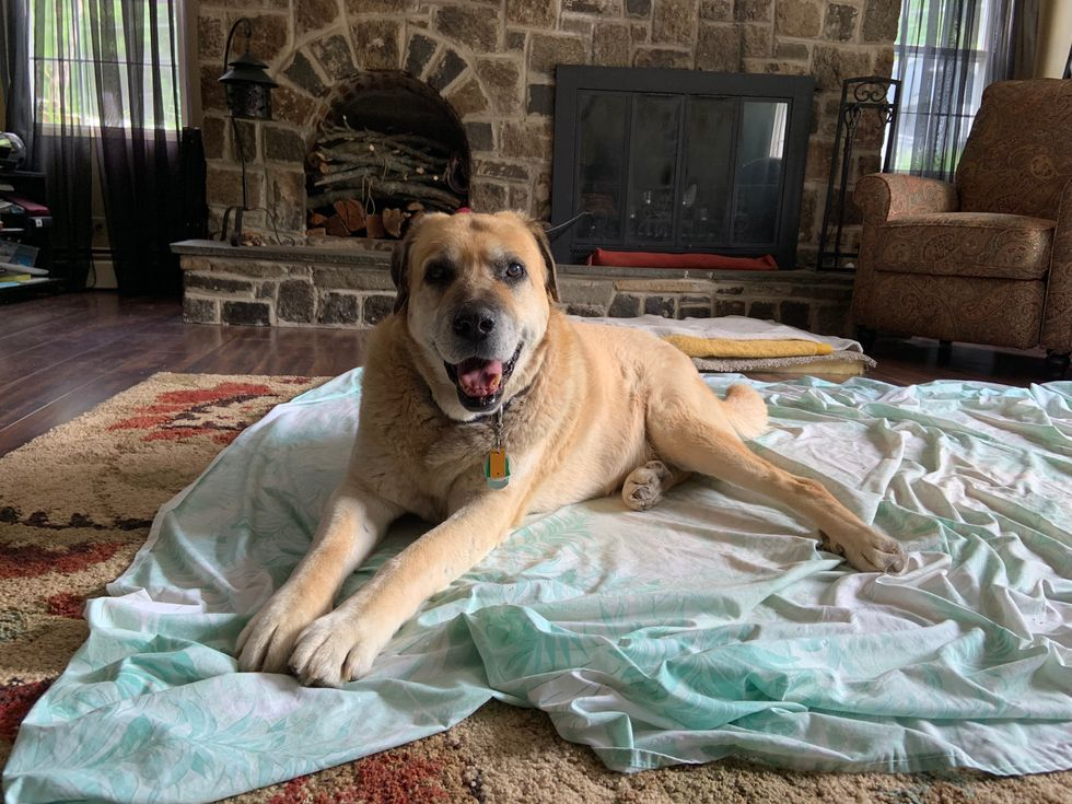 An Open Letter To The Dog That Took A While To Warm Up