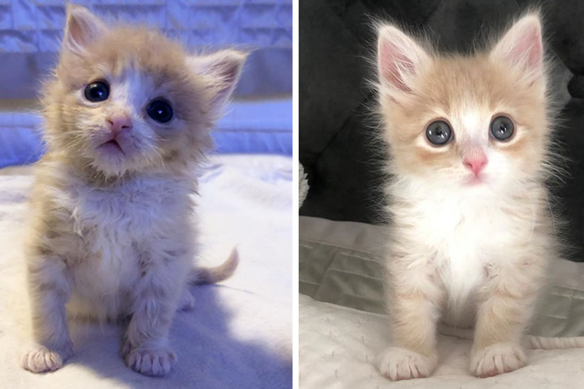 Kitten Who Was Alone at Shelter, Finds Happiness When Someone Saves Him from Uncertain Fate