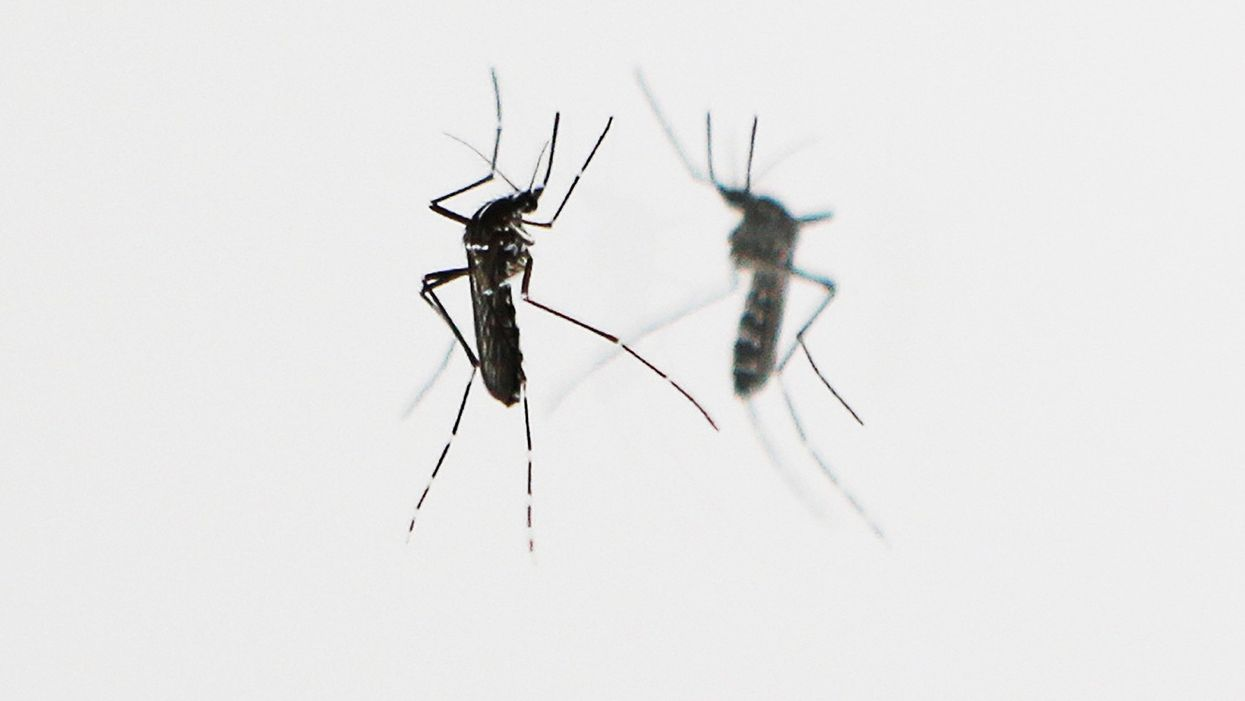 synthetic biology and mosquitos