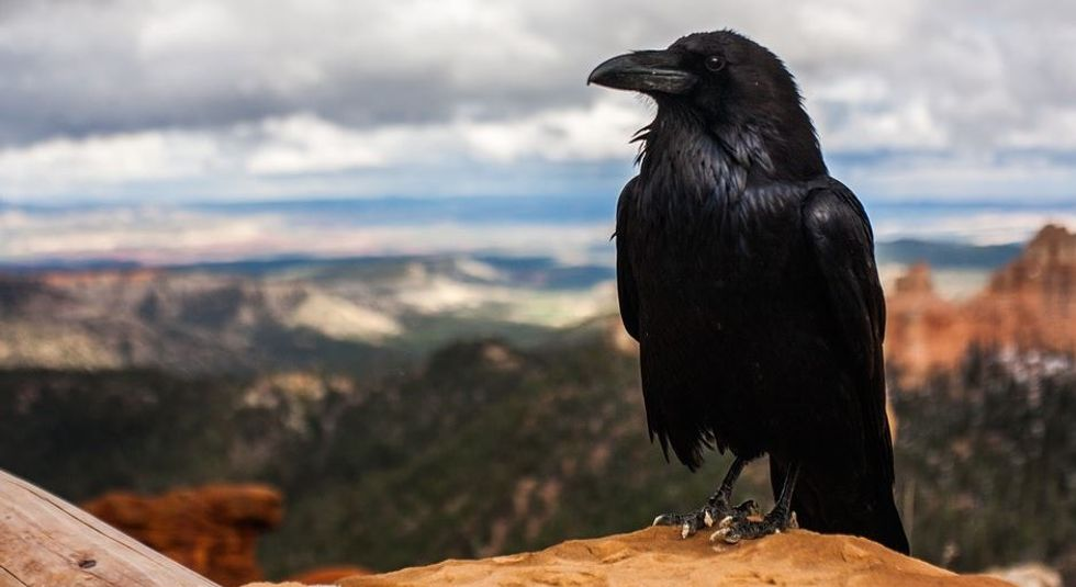 This man fed a family of crows for years — then they started bringing him presents.