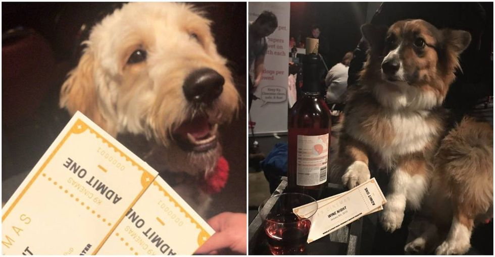 Heaven on Earth: This new theater in Texas is dog-friendly and serves all-you-can-drink wine.