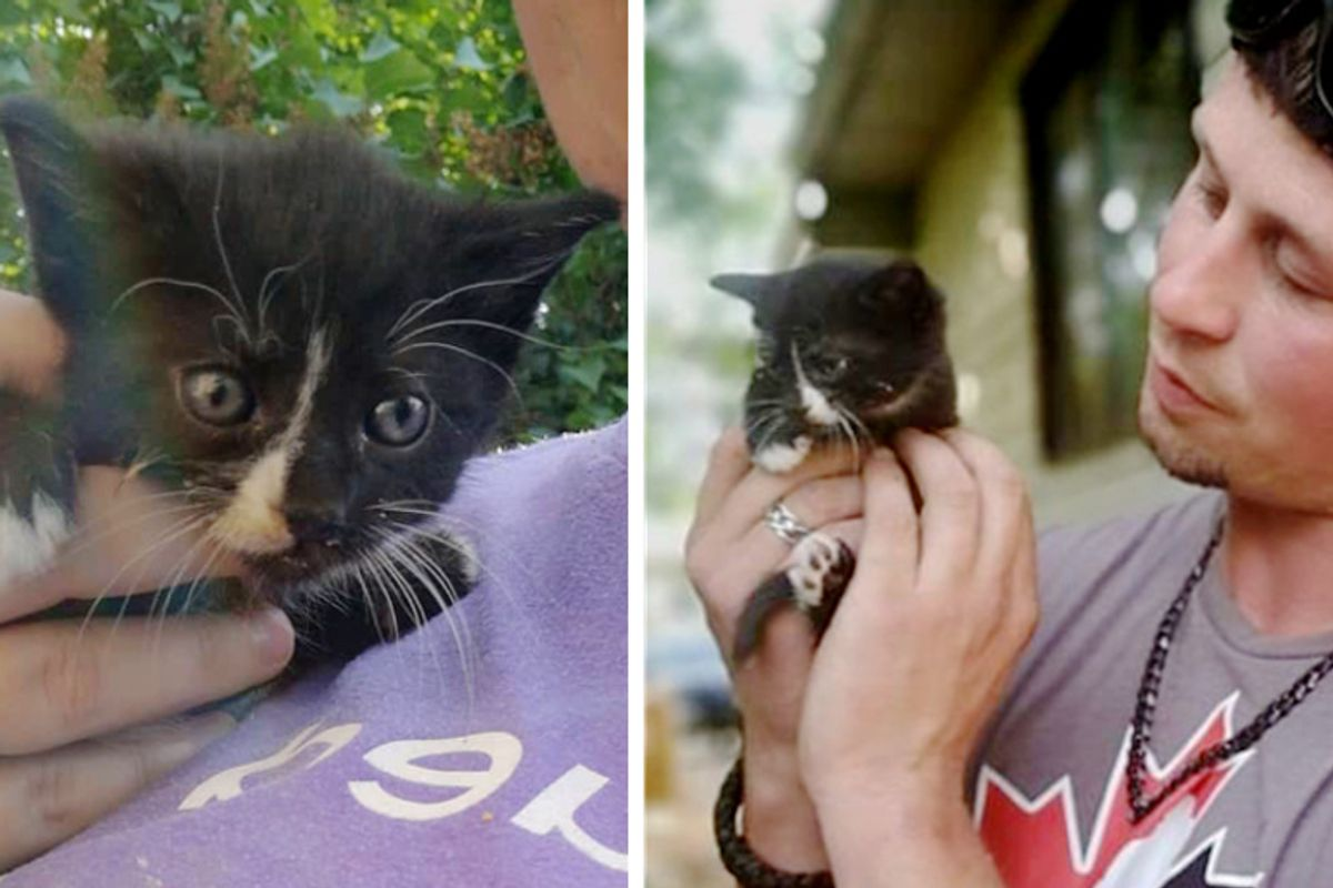 Man Helps Rescue Kitten Stuck in Attic and Asks to Adopt the Kitty Too