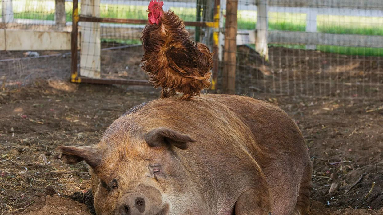 The Biggest Surprises From 'The Biggest Little Farm'