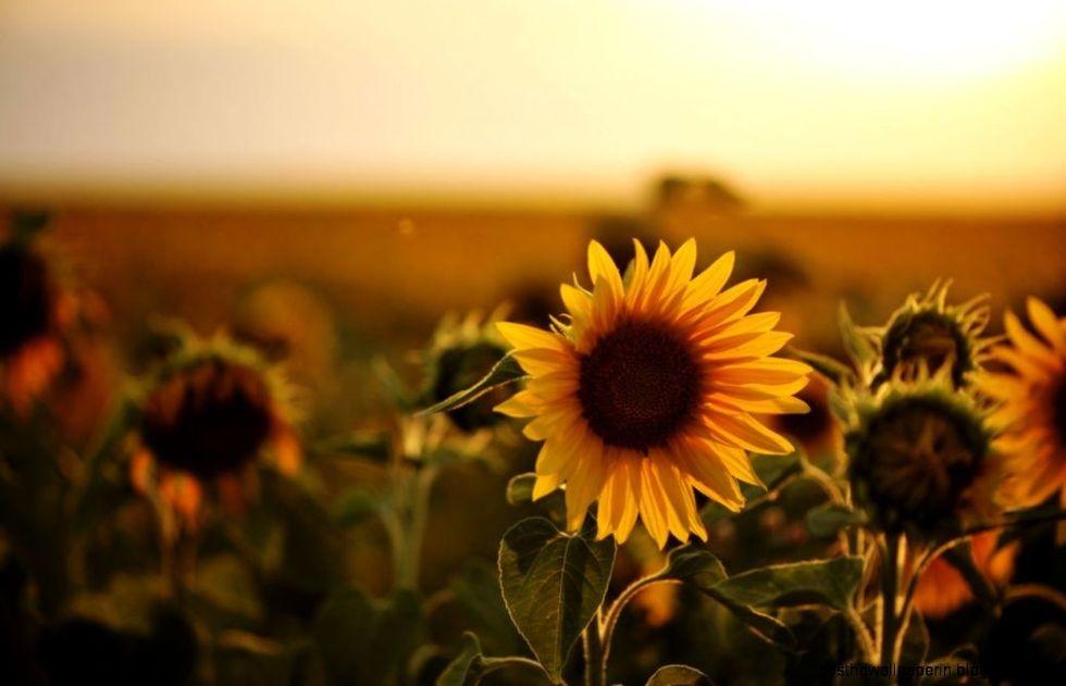 https://joessister.com/wp-content/uploads/2013/11/sunflower-photography-tumblr-wallpaper-1.jpg