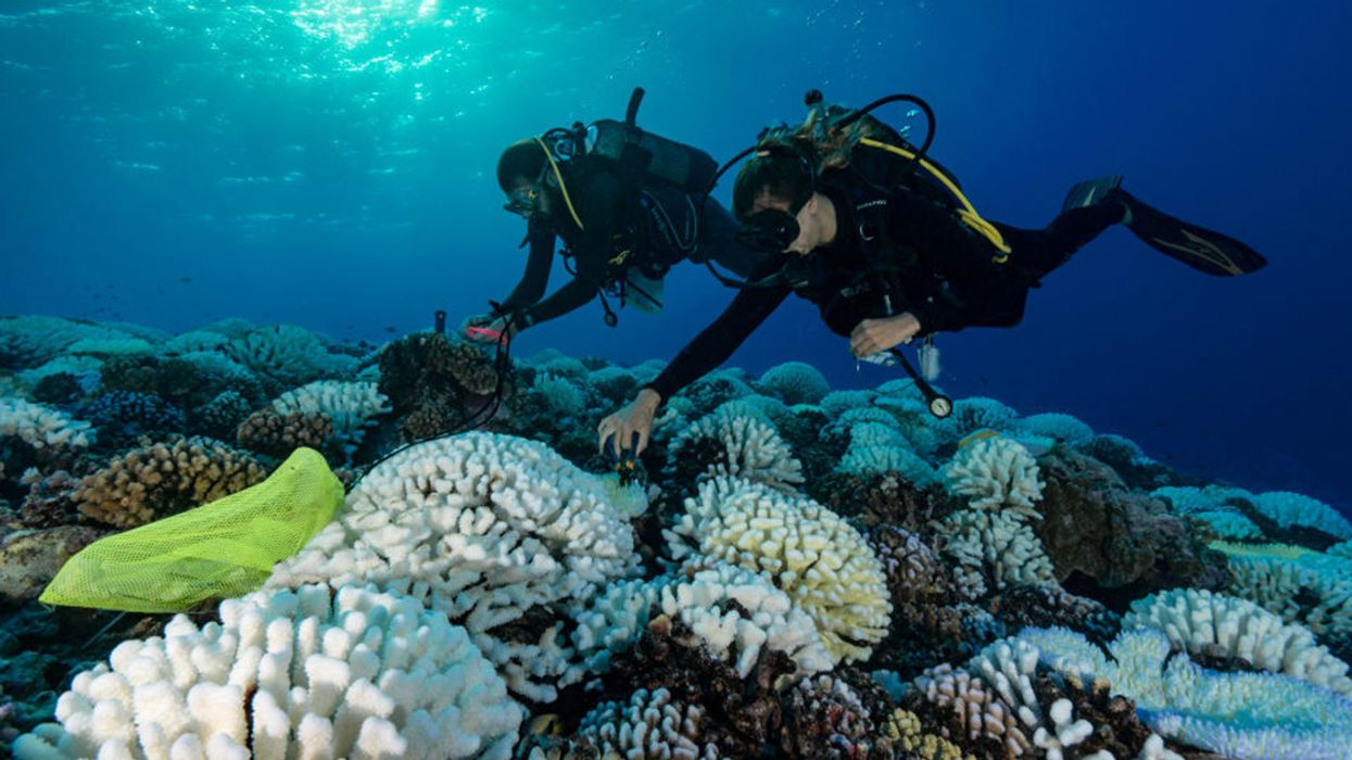Ocean Acidification Causing Coral Reefs to Be Less Resilient to Climate Change
