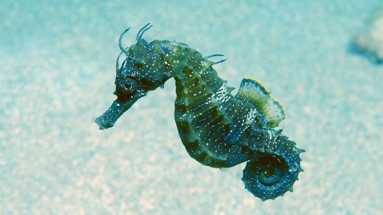 UK Government Adds New Marine Protected Areas Nearly 8x the Size of Greater London