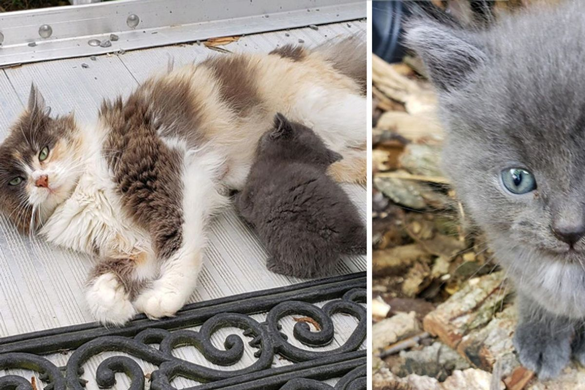 Stray Cat Had Kittens in Woodpile - Woman from Out of State Won't Leave Them Behind