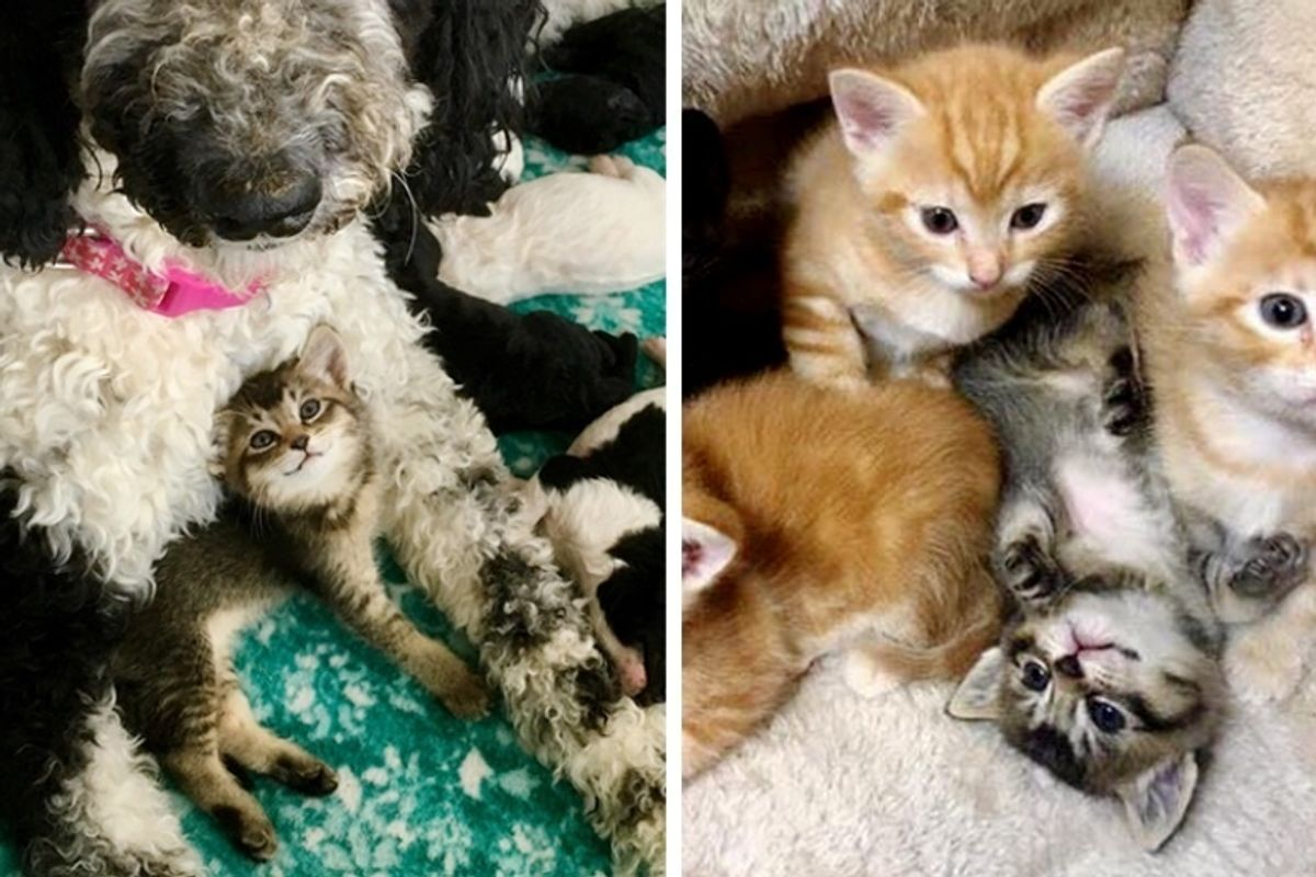 Kitten Found in Alley as Orphan - a Cat and Dog Took Turns to Be Her Mom
