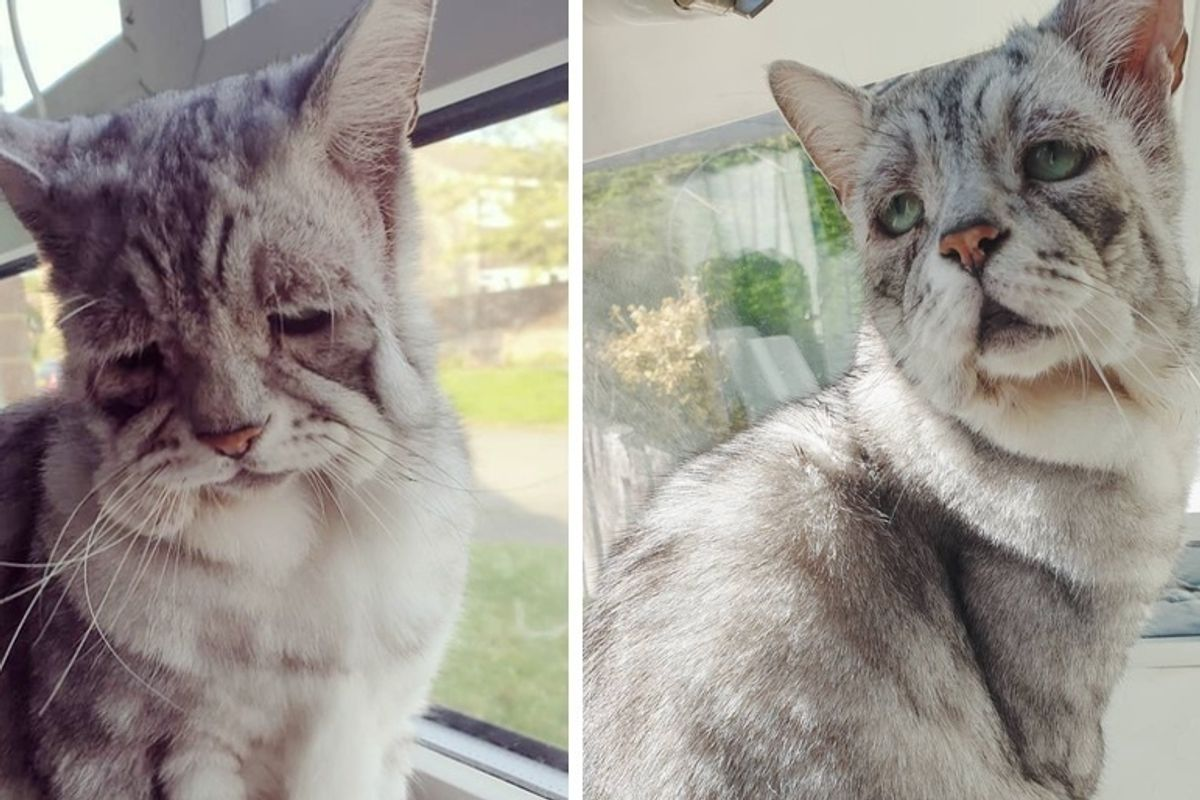 Cat With Rare Condition is so Happy When Someone Adopts Him and His Best Friend