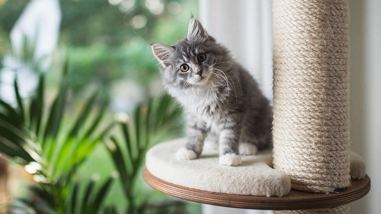 Cat Declawing Ban Passed by New York State Legislature
