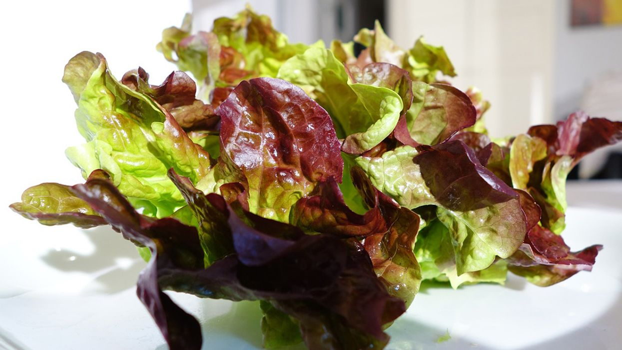 9 Health and Nutrition Benefits of Red Leaf Lettuce