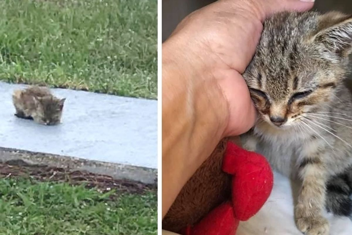 Woman Rescues Kitten Sitting on Sidewalk When Others Just Pass Her By - the Kitty Can't Stop Purring