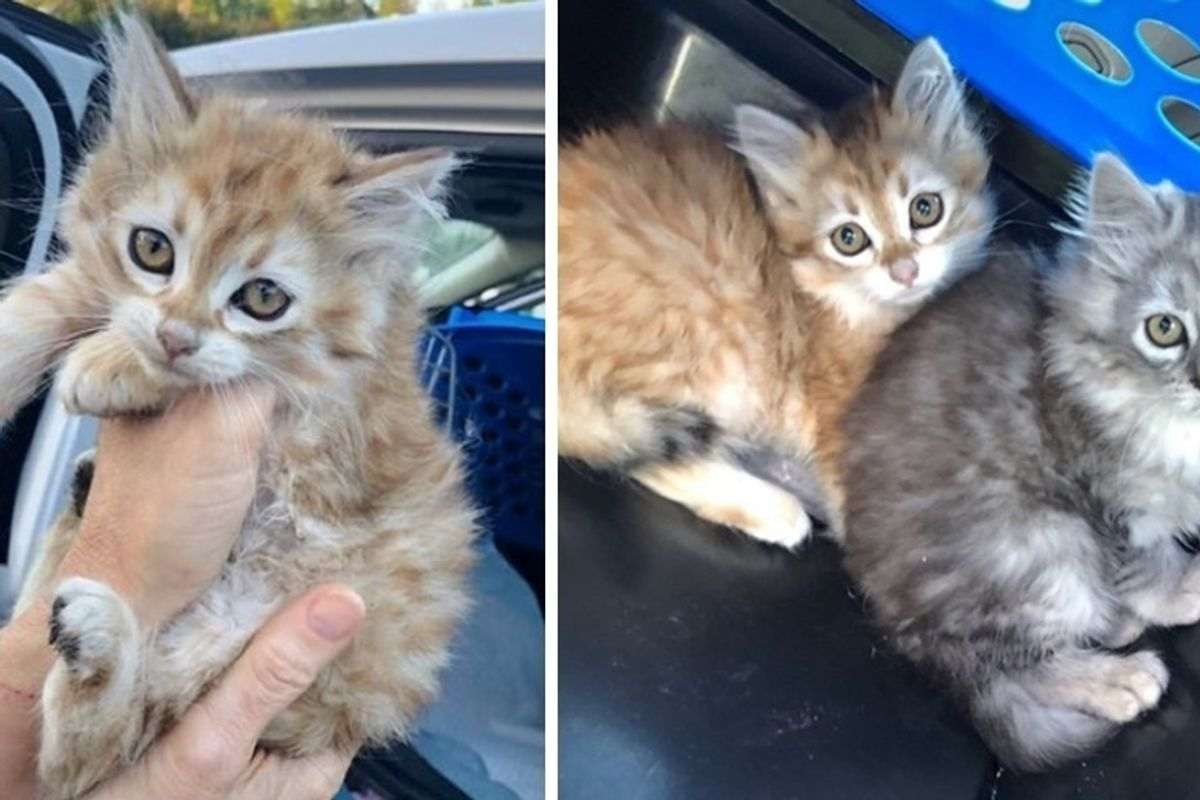 Young Man Rescued 3 Kittens and Went Back for 5 More that Were Hidden Away