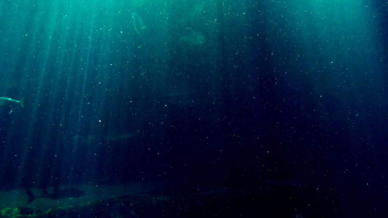 More Microplastics in Deep Sea Than Great Pacific Garbage Patch