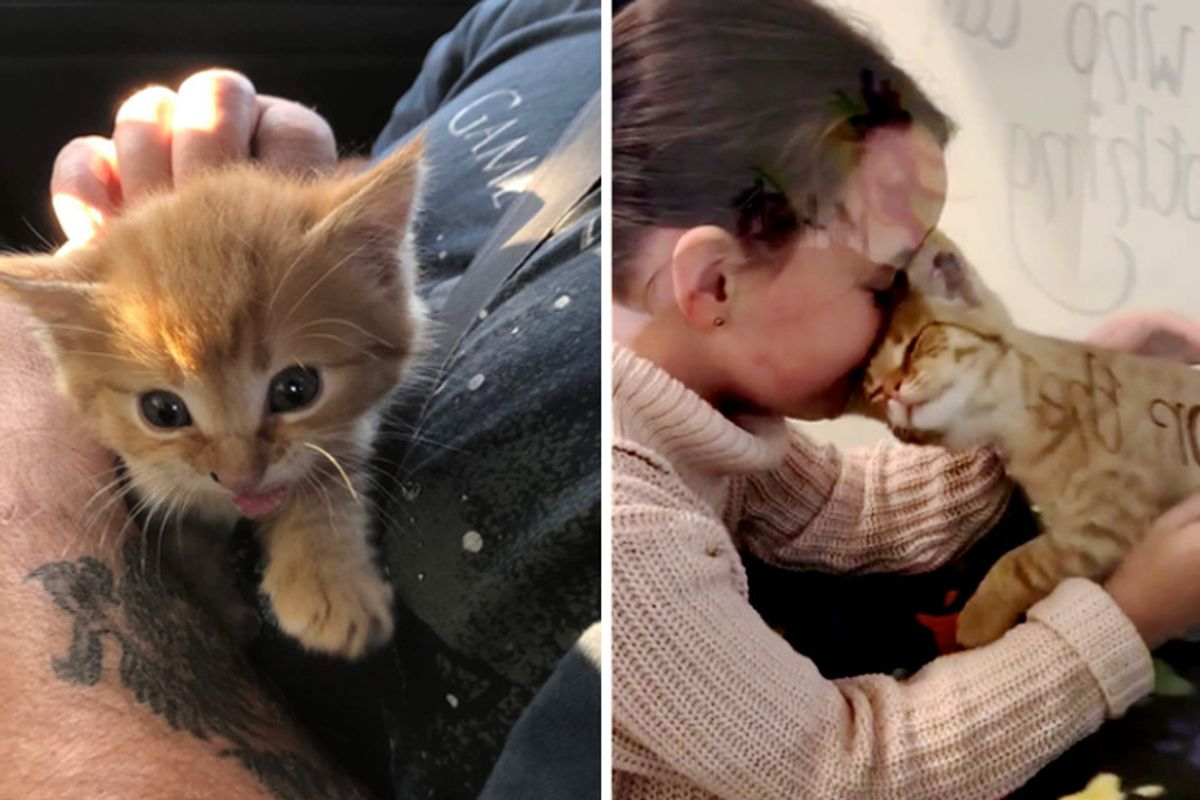 Little Girl Went to Shelter to Help Out But Ended Up Being Chosen by Kitten