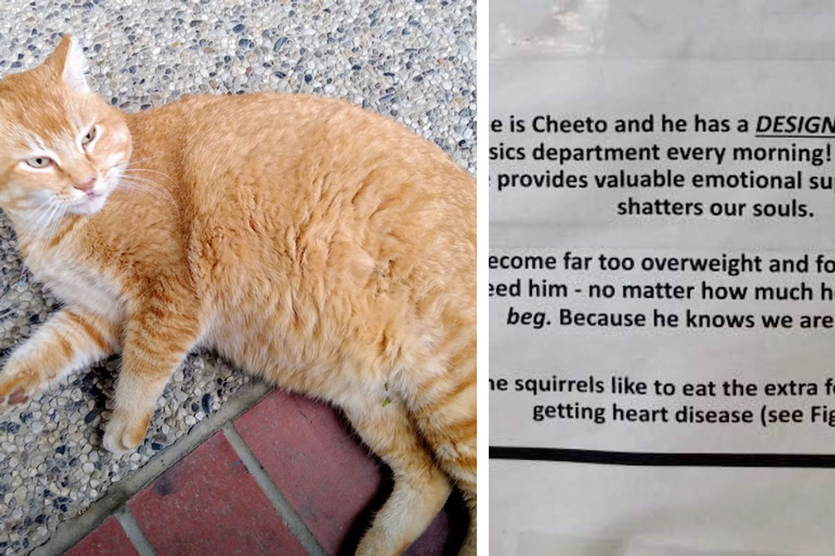 Students Post Notes about Their Beloved Cat After He's Been Getting A Few too Many Meals