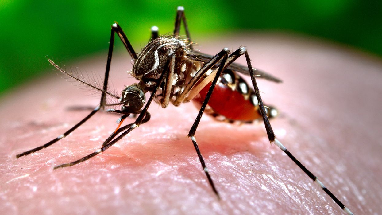 Climate Crisis Could Spread Dengue Fever Through Most of Southeast U.S.