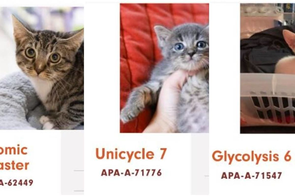 Whoever is naming the cats at this Austin shelter probably needs to be drug tested.