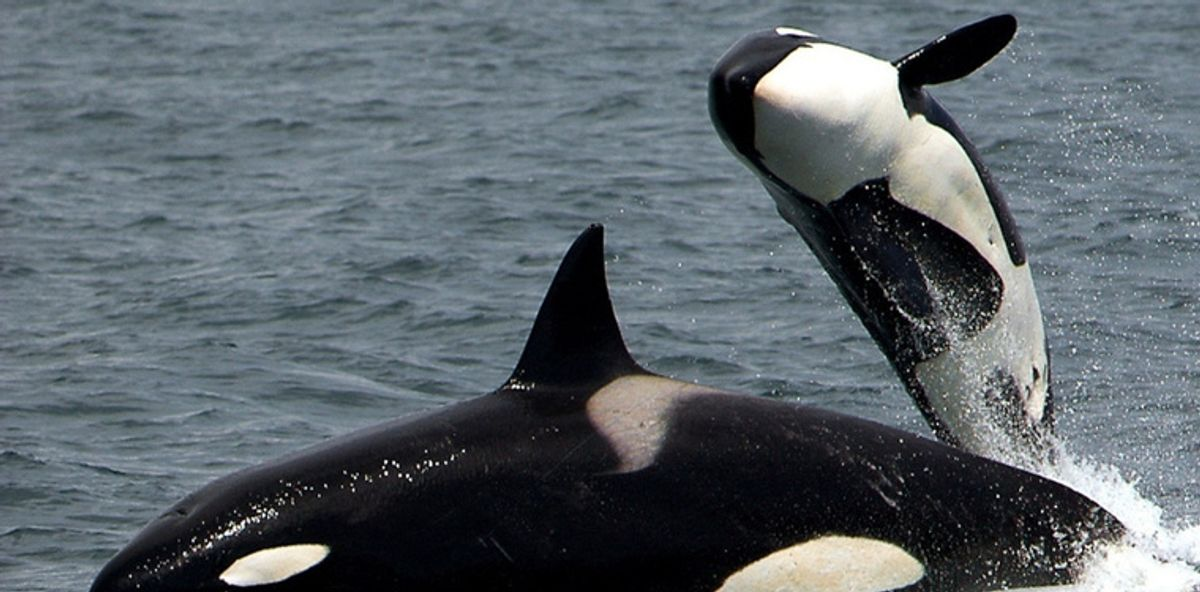 "Canada just passed the ""Free Willy"" bill, making it illegal"