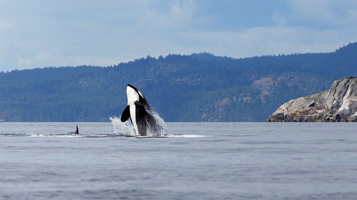 Canada Passes 'Free Willy' Bill Banning Whale and Dolphin Captivity