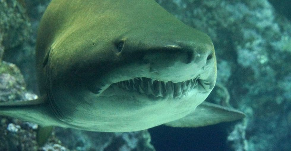 Australia just came up with an ingenious way to help stop shark attacks.