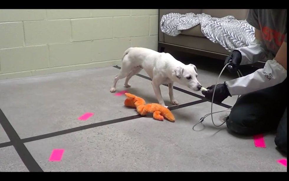 When this puppy mill dog was rescued, she couldn't stand humans. But just look at her now.