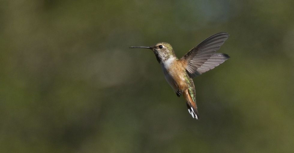 In this charming short story, a hummingbird explains why we have to at least try.
