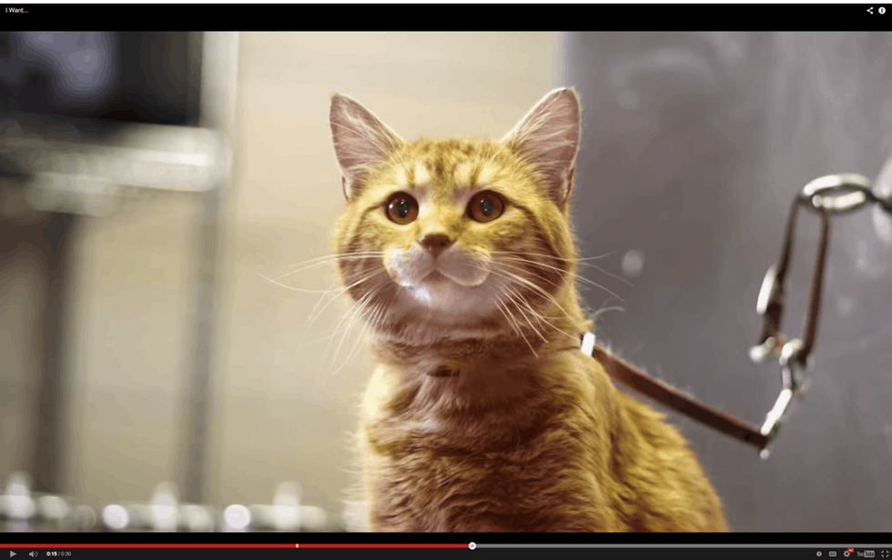 30 Seconds Of Talking Cats That'll Make You Smile