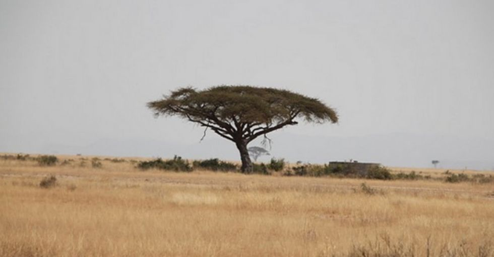 A search engine like Google, except for one small detail: It plants trees!