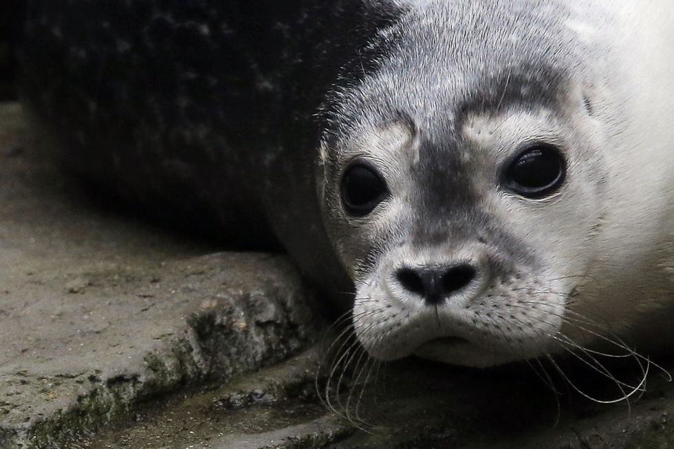 He thought the seal might attack him. Instead, he got a winning picture and an even better story.