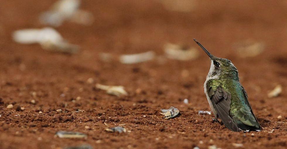 7 reasons why hummingbirds are nature's secret badasses