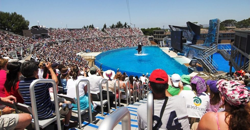 A movie went behind the scenes, and now SeaWorld is just trying to stay afloat.