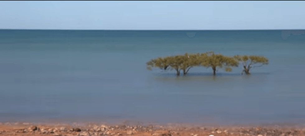 A time-lapse video that shows you how to breathe with the tide. It's wonderful.