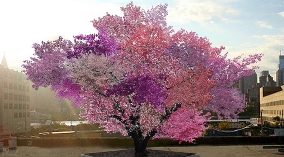 Meet the tree that's wowing folks all over the country with its unusual bounty of fruit.