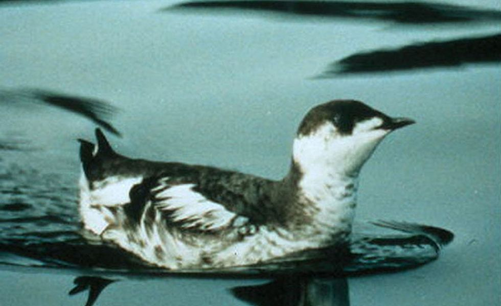 This bird species was contributing to the demise of another. So scientists stepped in to help.