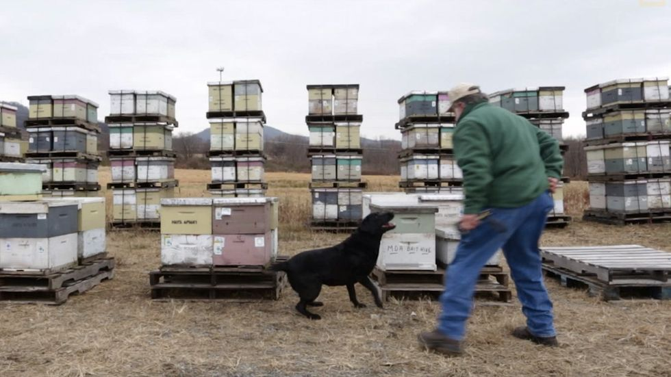 This special dog is saving our bees. She's the only one that can.
