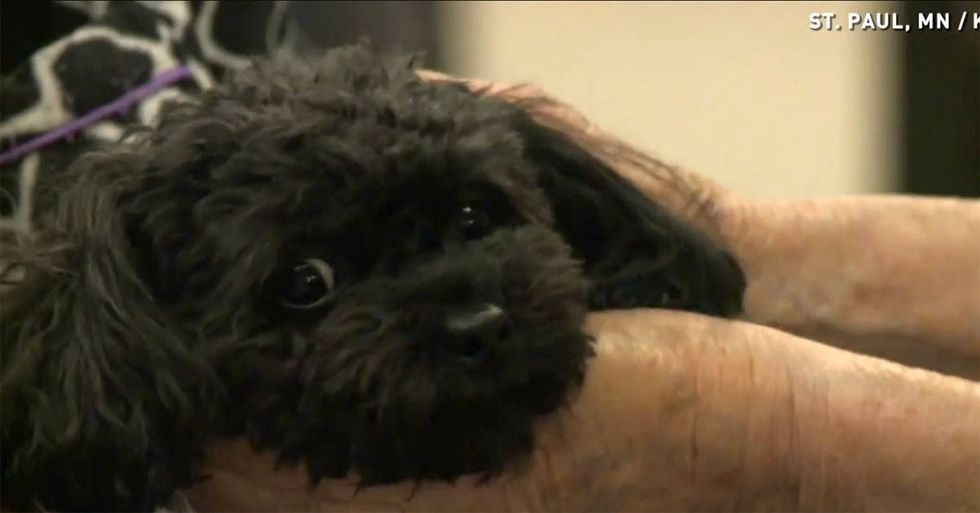 Nursing home residents are certain this tiny dog is from heaven. After seeing her in action, I agree!