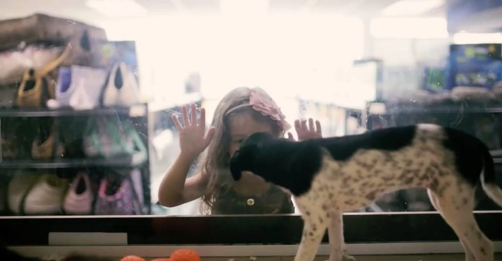 When a pet store's customers met their new pets, they had no idea they'd come from shelters.