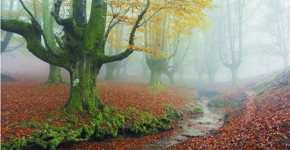 11 real-world forests that look like they're straight out of a fairytale.