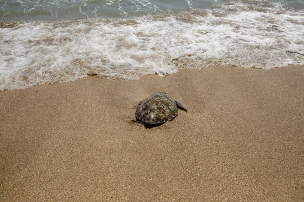 These photos of sea turtles being released back into the sea show what amazing creatures they are.