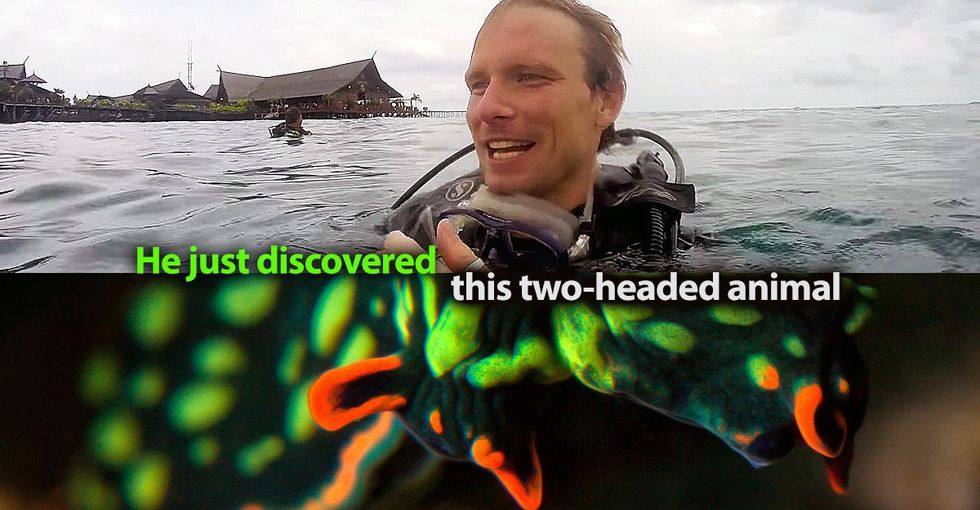 Ocean enthusiasts just discovered a two-headed sea creature, and it's mesmerizing.