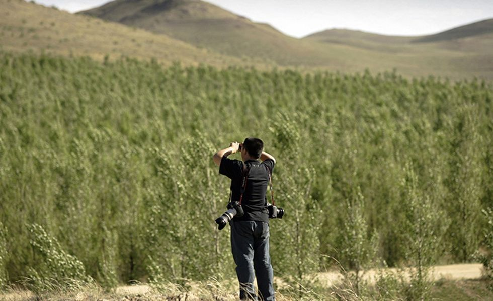 China is building another great wall — of trees. To hold back the desert.