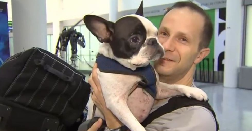 An Air Canada pilot put a dog's life above profit. It's exceptional and how the world should be.