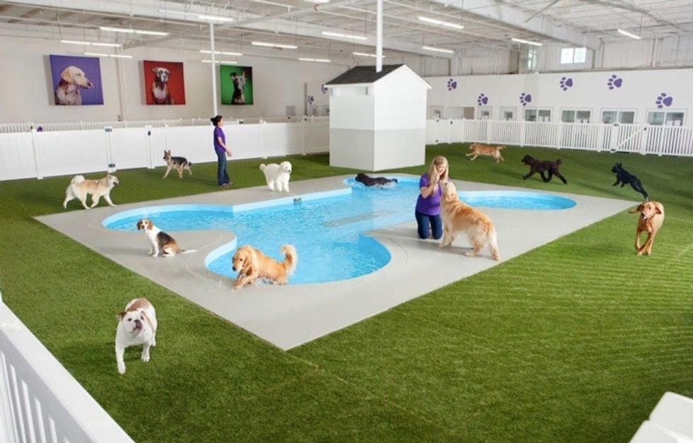 How this NYC airport is changing the game for pet travel