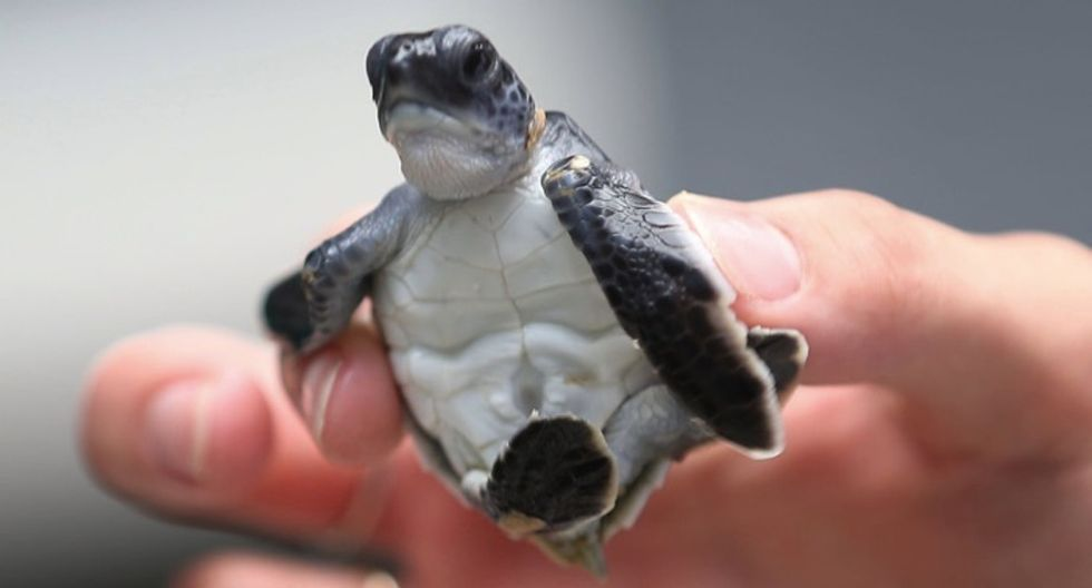 580 baby sea turtles just got a head-start on life thanks to the U.S. Coast Guard.
