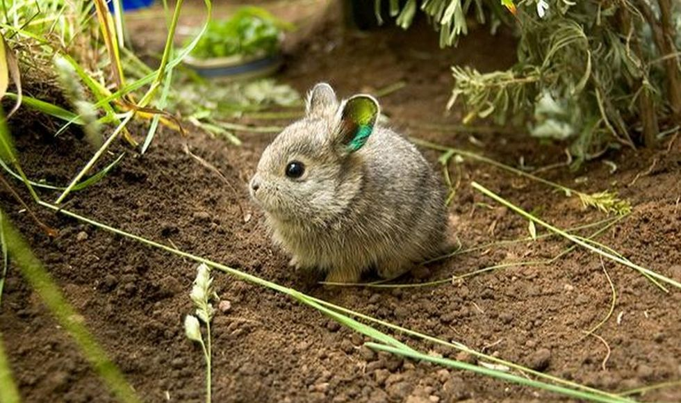 When these scientists battled it out to identify the world's cutest animals, we all won.